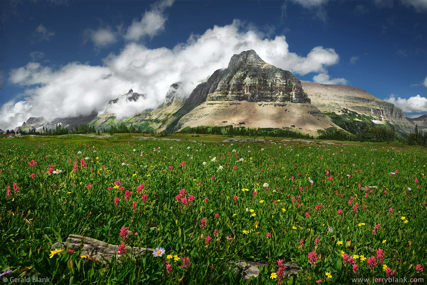 #24533 - A north view toward Bishop's Cap, the Garden Wall, the south ridge of Pollock Mountain, and the east ridge of Piegan Mountain, from an alpine meadow filled with arnica and scarlet paintbrush, in Glacier National Park, Montana - wildflowers photo by Jerry Blank