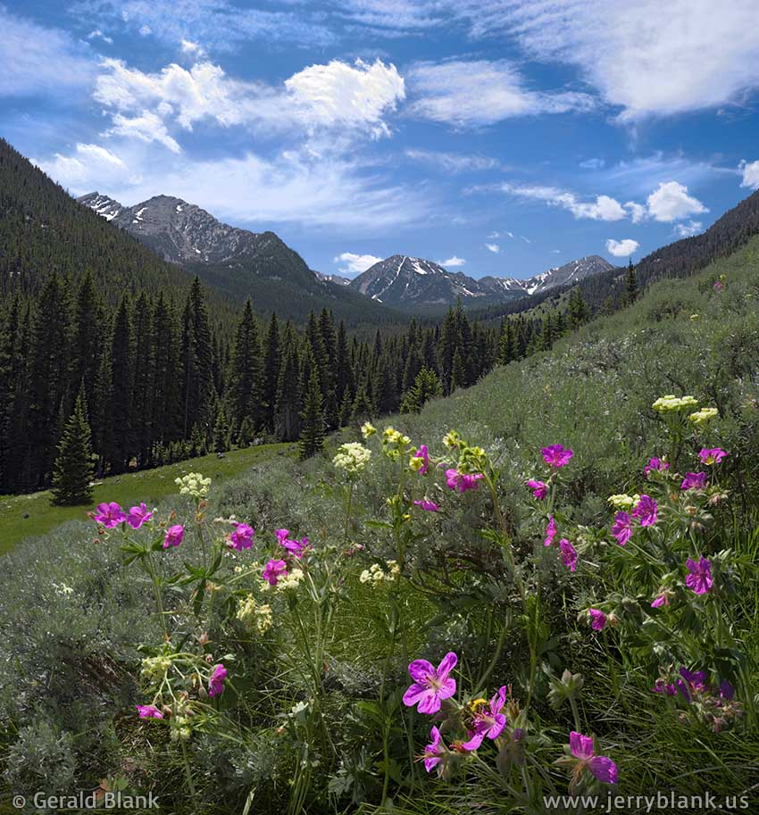 #08888 - Wildflowers in the South Boulder River canyon, in Montana's Tobacco Root Mountains - photo by Jerry Blank