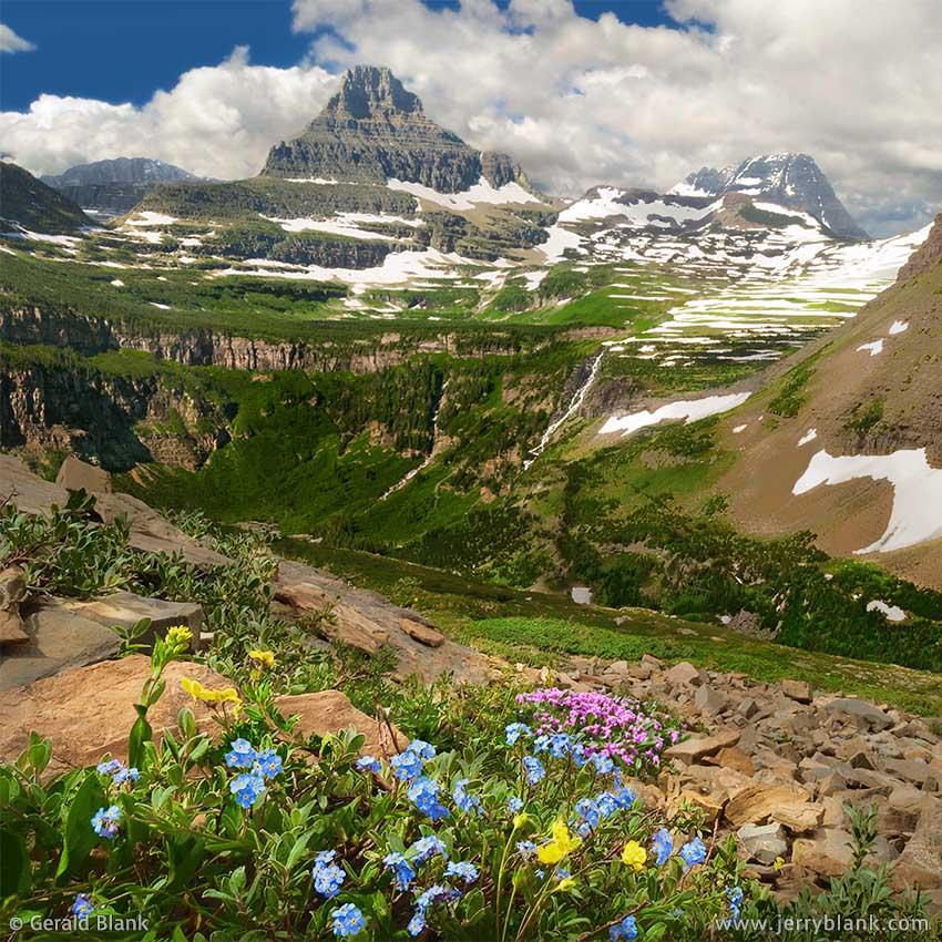 #00042 - Looking toward Reynolds Mountain and the Continental Divide, tiny alpine wildflowers spring to life on the southwest slope of Piegan Mountain in Glacier National Park, Montana - photo by Jerry Blank
