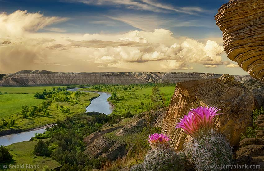 #04770 - Purple pincushion cactus and sandstone formation overlooking the Little Missouri River valley, McKenzie County, North Dakota - photo by Jerry Blank
