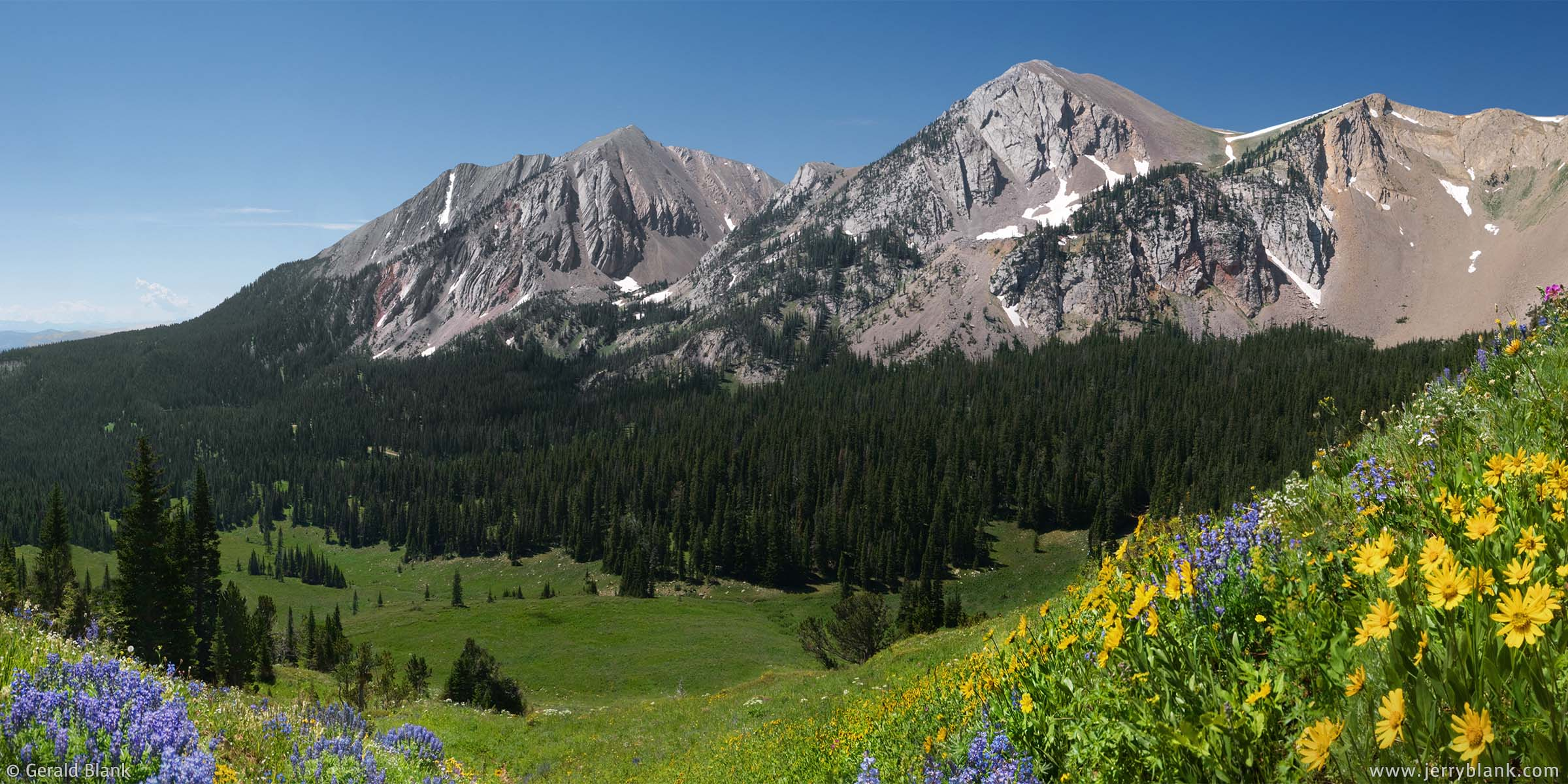 #09404 - Lupines and arnica cover a meadow northeast of Sacagawea Peak and Hardscrabble Peak in Montana's Bridger Mountains - wildflowers panoramic photo by Jerry Blank