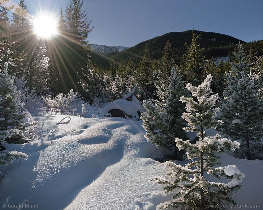 #12573 - Frost on spruce trees at Wright Gulch near the East Boulder River, in Montana's Beartooth Mountains - photo by Jerry Blank