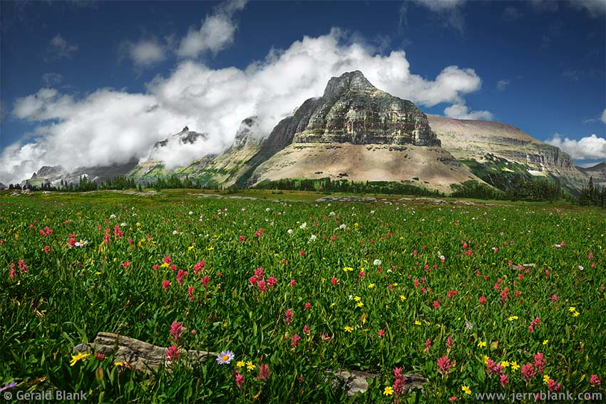 #24533 - A north view toward Bishop's Cap, the Garden Wall, the south ridge of Pollock Mountain, and the east ridge of Piegan Mountain, from an alpine meadow filled with arnica and scarlet paintbrush, in Glacier National Park, Montana - photo by Jerry Blank